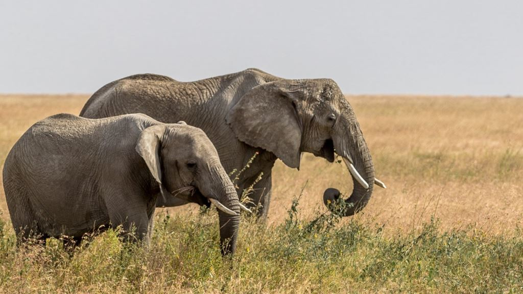 best of africa travel best of the kruger national park